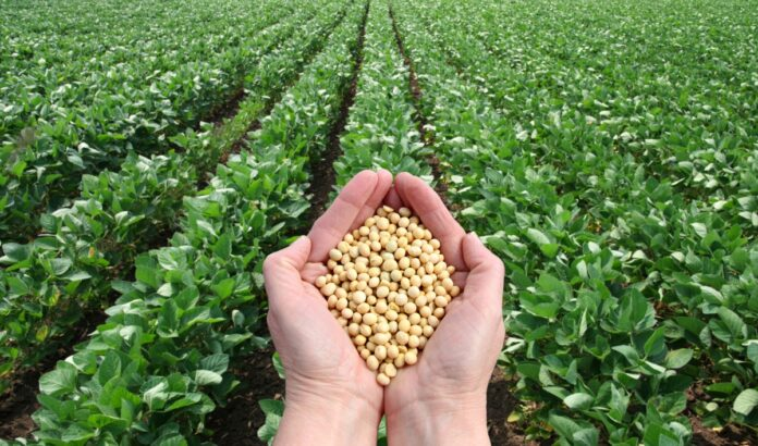 Just after the first week of June Sowing soybean Advice to act