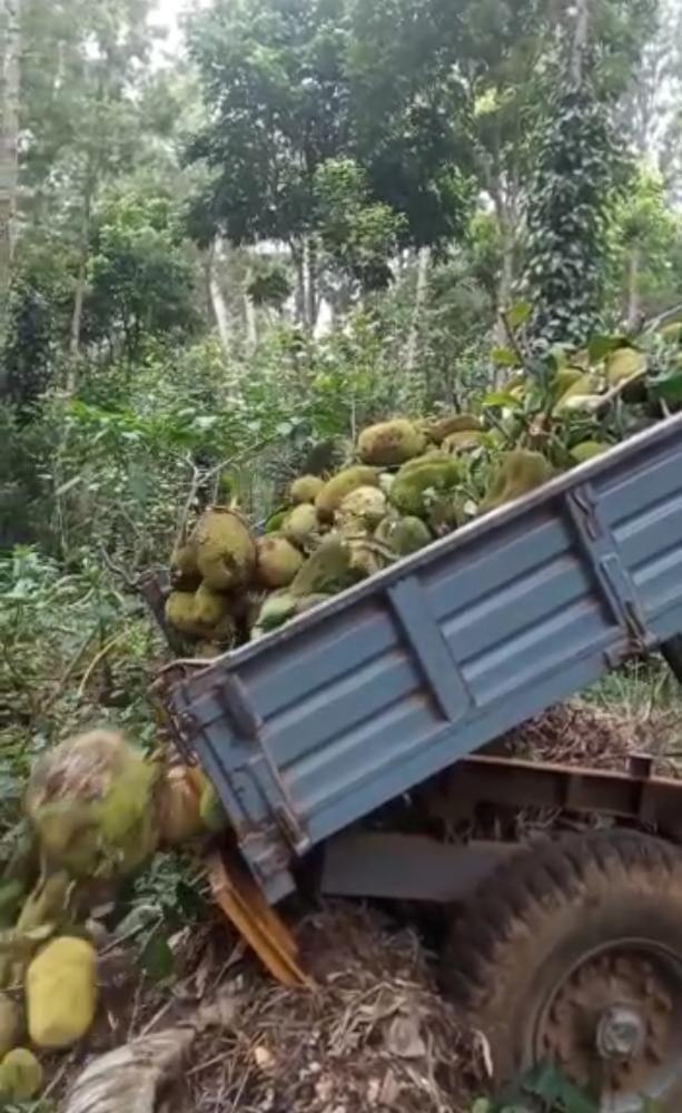 ELEPHANT damaging plant and trees