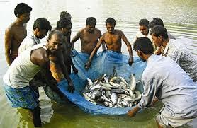 Fisheries Scheme